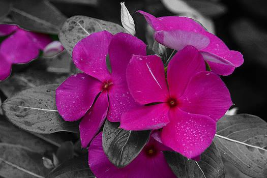 Purple Flowers 2 by Jim Martin