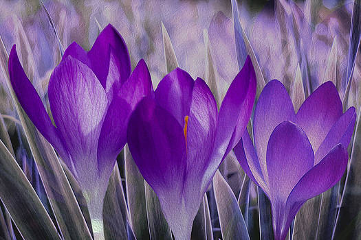 Purple flowers 2 by Khiet Bui