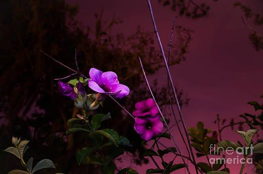 Purple flowers at night by Shawn  Bowen