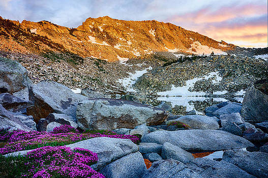 Purple Flowers at sunset by Kevin Rowe