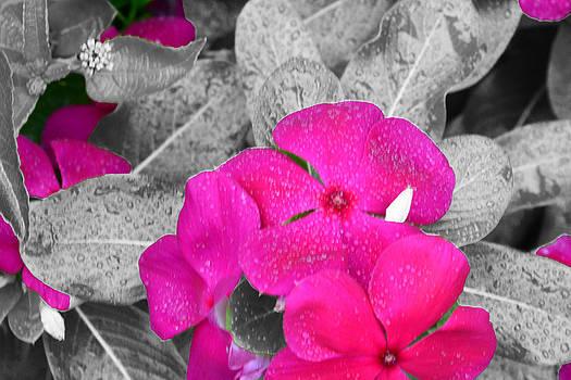 Purple Flowers by Jim Martin