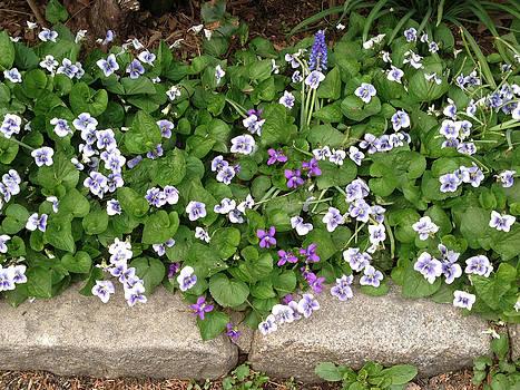 Purple Flowers by Kathleen Anderle