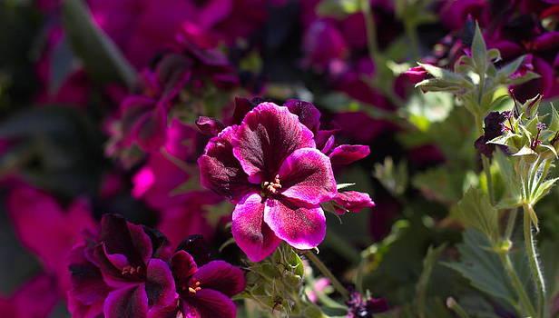 Purple Flowers by Nicky Jameson