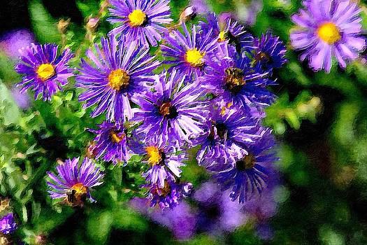 Purple Flowers by Saibal Ghosh