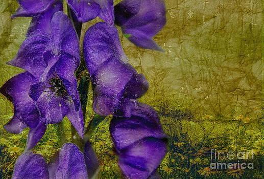 Purple Foxglove by Andrea Kollo