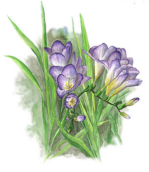 Purple Freesias by Crystal Newton