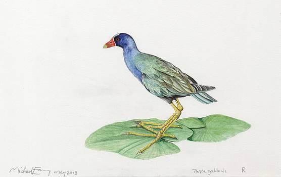 Michael Earney - Purple Gallinule