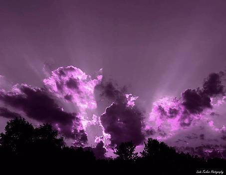 Purple Glory by Linda Tucker