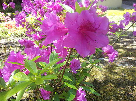 Purple by Haley Lightfoot