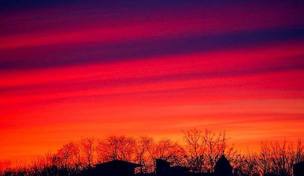 Purple Haze by Jill Moran