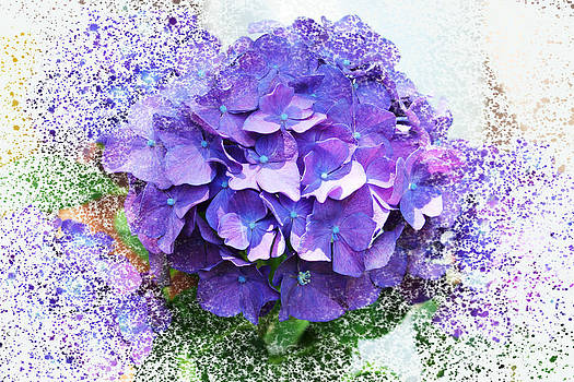 Purple Hydrangea Abstract by Judy Palkimas
