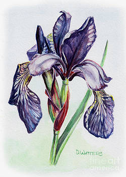 Purple Iris by Darlene Watters