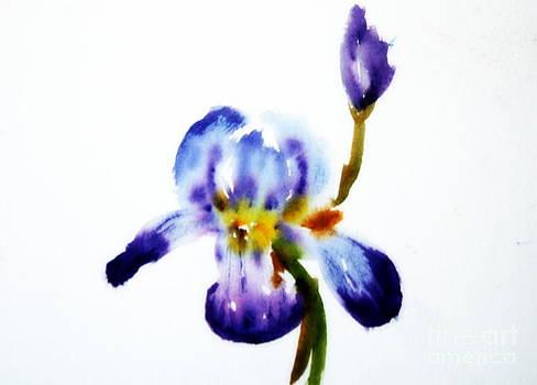 Donna Walsh - Purple Iris