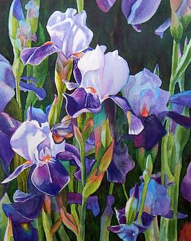 Purple Iris Garden by Rachel Armington
