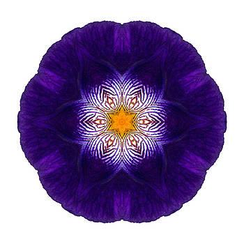 Purple Iris II Flower Mandala White by David J Bookbinder