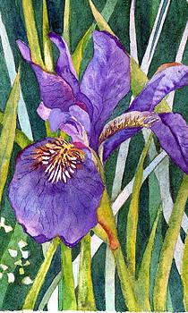 Susan Duxter - Purple Iris