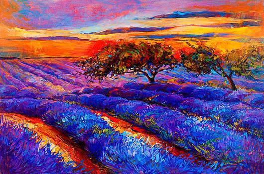 Purple by Ivailo Nikolov