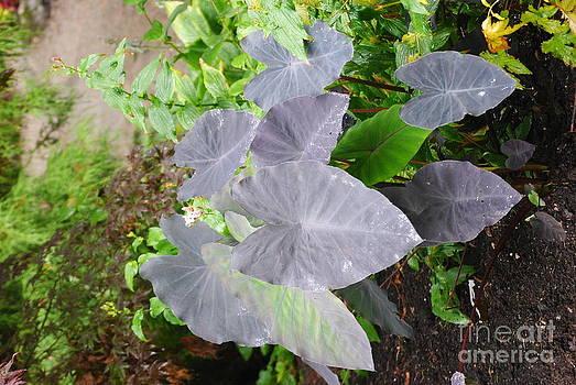 TChamberlin Photography - Purple Leaves