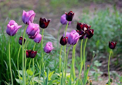 Rosanne Jordan - Purple Light and Dark