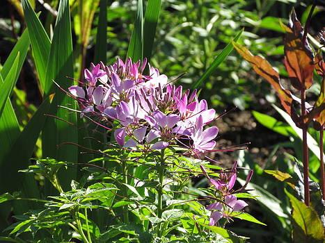 Purple Love by Dianne Furphy