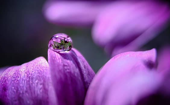 Purple Magic by Ursula Klepper