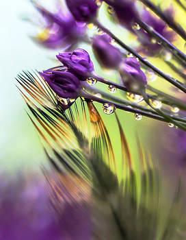 Kenneth Haley - Purple Mist