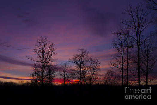Purple Morning by Debra K Roberts