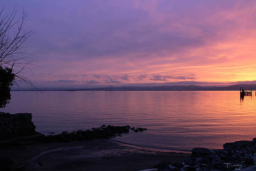 Purple Morning by Tammy Kuiper