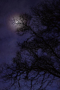 Purple Nights by Melanie Lankford Photography