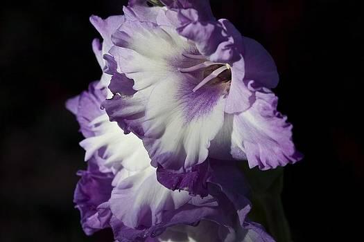 Purple on Black by Dora Korzuchowska