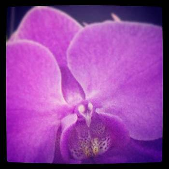 Purple Orchid ©ashley F by Ashley Flowers