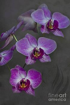 Heiko Koehrer-Wagner - Purple Orchid Flower
