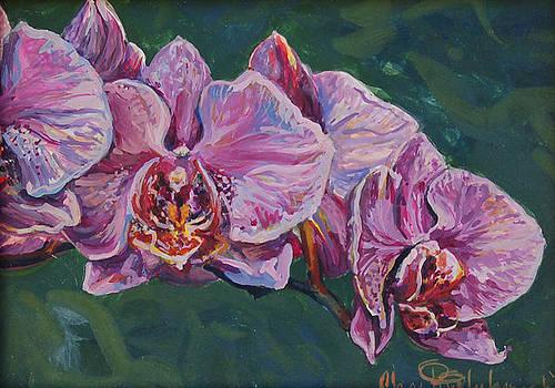 Purple Orchids by Christine Lytwynczuk
