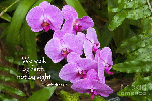 Jill Lang - Purple Orchids with Scripture