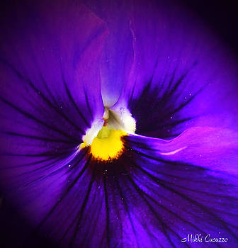 Purple Pansie Closeup by Mikki Cucuzzo