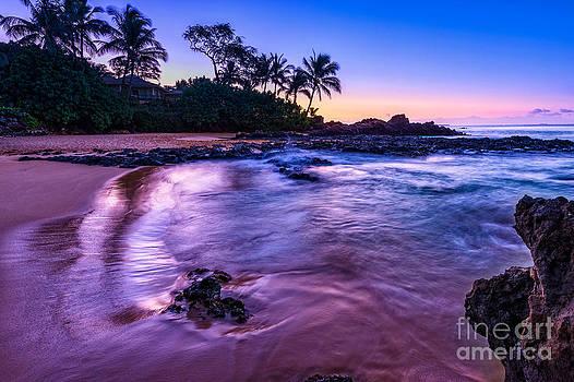 Jamie Pham - Purple Paradise
