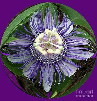 Purple Passion Ball by Annette Allman