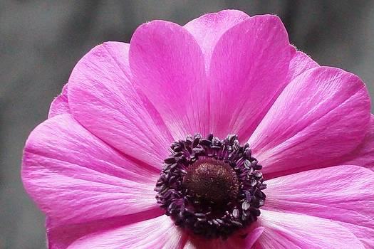 Dawn Hagar - Purple Petals