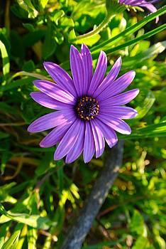 Purple Pleasure by Tamara Bettencourt