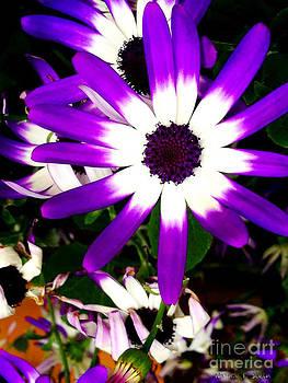 Nancy Stein - Purple Popping