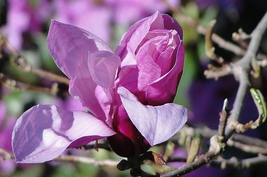 Dawn Hagar - Purple Promise