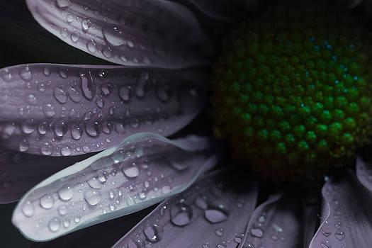 Purple Rain by Chris Brehmer Photography