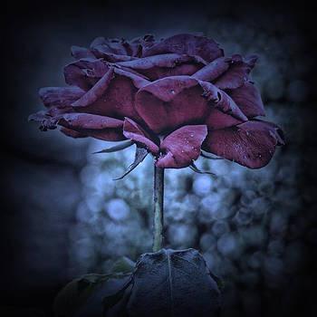 Purple Rose by Angel Eowyn