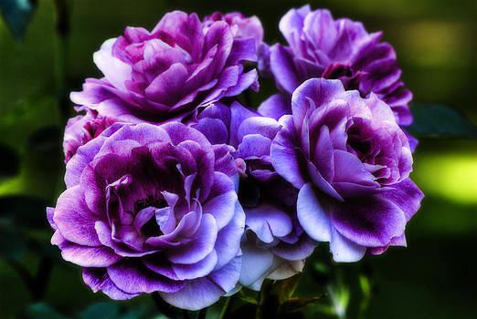 Ludmila Nayvelt - Purple Roses