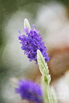 Purple Sage Texture by Pamela Gail Torres