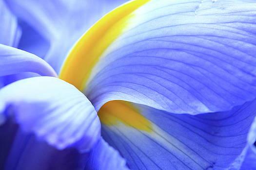 Purple by Sara Snyder