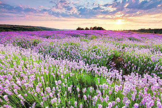 Purple Sea by Evgeni Dinev