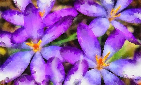 Purple Stars by Patrick OHare