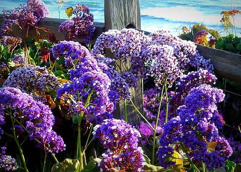 Purple Status Beach Overlook by Vicki Coover