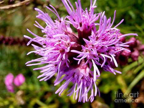 Purple by Steven Valkenberg